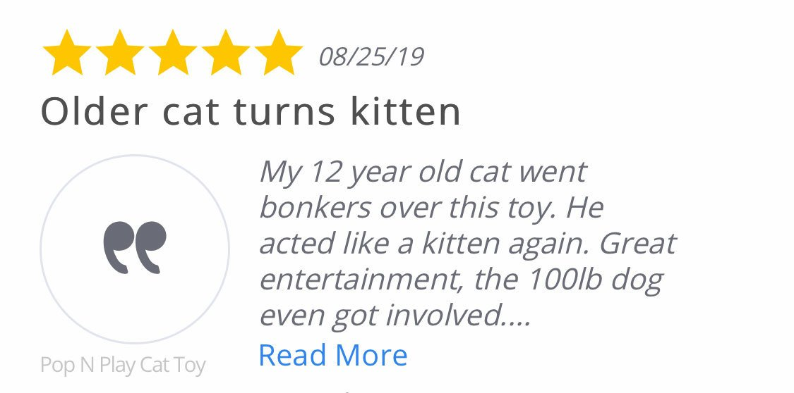 testimonial my older cat turned kitten
