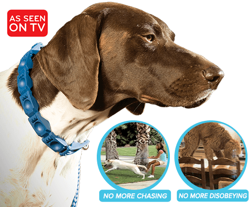 Dog wearing Command Collar® – As Seen on TV – No More Chasing, No More Disobeying