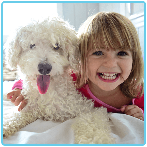 Smiling Little girl and her curly haired white dog